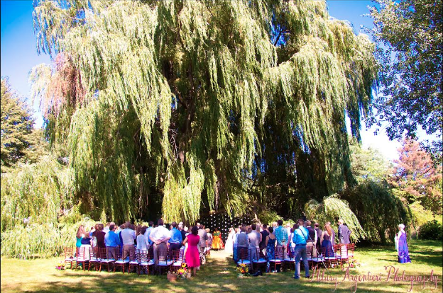 Wedding Under Willows Mccarthy Tents Amp Events Party